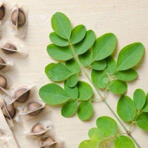 Moringa Oleifera - Moringa oleifera - 3 Sementes - SoFlor Sementes